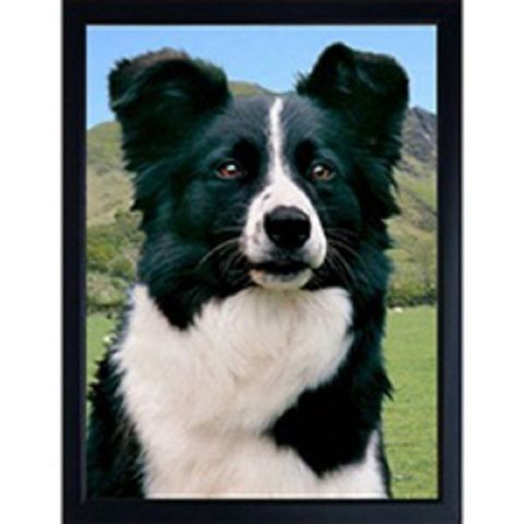 BORDER COLLIE 3D FRIDGE MAGNET